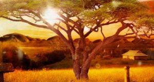 Im Schatten der goldenen Akazie: Australien-Roman