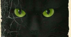 Katzensitter Krimi