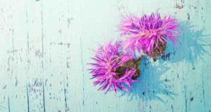 Der Stachelbeersommer: Karma zum Verlieben