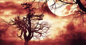Schatten der Sehnsucht