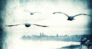 Zeit voller Zorn (Kripo Bodensee 5)