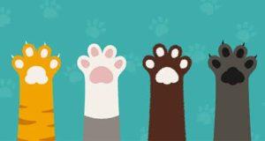 Katzen an die Macht