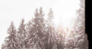 Almnacht: Weihnachts-Special