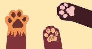 Katzen an die Macht II: Abenteuer in der Katzenpension