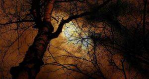 Das Grauen im Wald