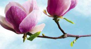Magnolienduft und Liebeszaube