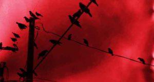 Das Dunkel der Nacht: Sammelband Prior-Reihe