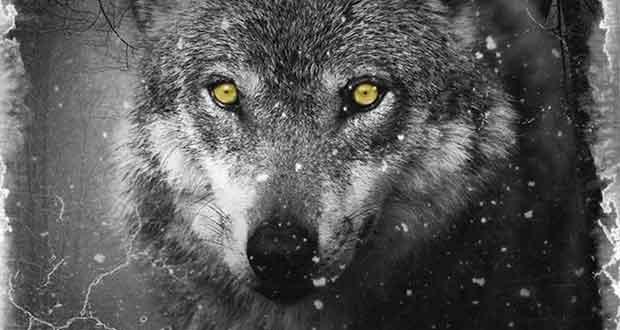 Wolf Krimi