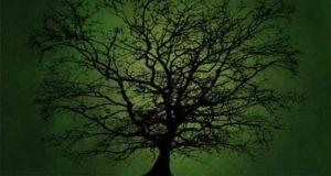 Waldlandchroniken: Im Schatten des Bannwalds