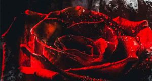 Rose in the Darkness: Dein Leben in seiner Hand
