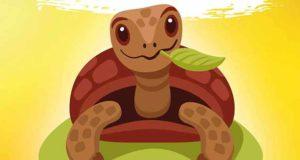 DAS GROSSE SCHILDKRÖTENLEXIKON - Landschildkröten halten für Einsteiger
